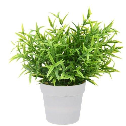 Művirág gyógynövények, 24 cm