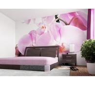 Fototapeta Orchidej 254 x 360 cm