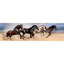 Poster autocolant Wild Horses, 500 x 14 cm