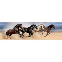 Samolepiaca bordúra Wild Horses, 500 x 14 cm