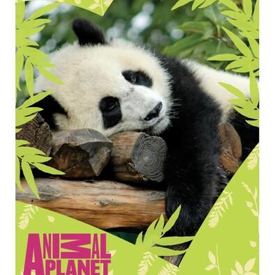 Dětská deka Animal Planet - Panda, 120 x 150 cm