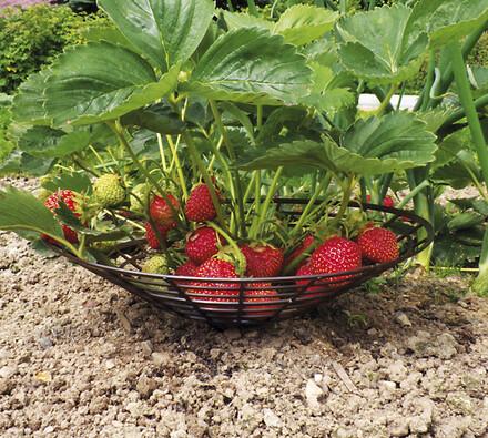 Podložky pod jahody, 30 cm, černá