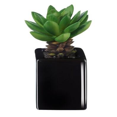 ASA Selection umělá květina v květináči mini succulents 11751