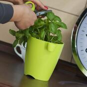 Květináč na bylinky Limes uno 1,3 l, zelená
