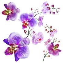Decorațiune autocolantă Orhidee, 30 x 30 cm