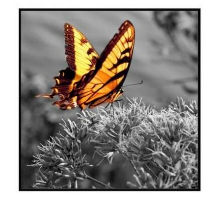 Fotoobraz Butterfly 60x60 cm, vícebarevná, 60 x 60 cm