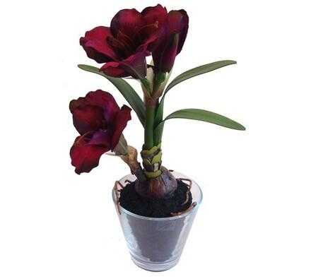 Umělá květina amarilis ve skleněném květináči fialová