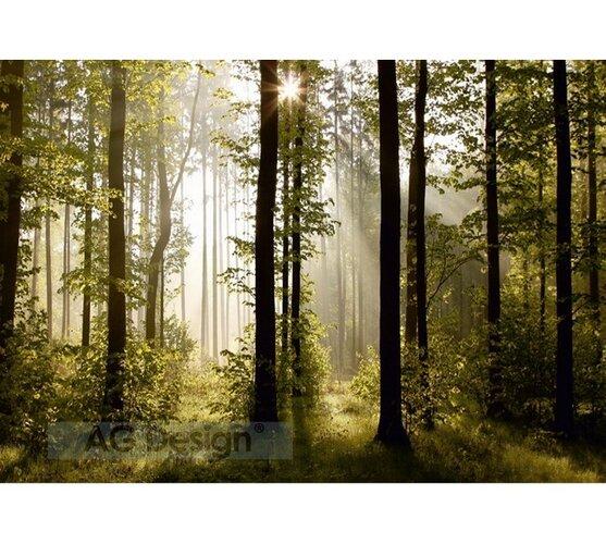 Fototapeta Les 254x360 cm, Hornschuch