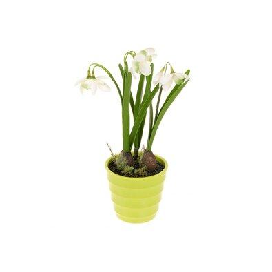 Kwiat sztuczny Śnieżyczki w doniczce, 26 cm