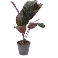 Koopman Umělá rostlina v květináči Patty, 30 cm