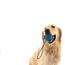 Vrhacia a preťahovacia loptička REBEL DOG, 20 x 6 cm
