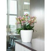 Lechuza Classico LS 28 plastový květináč samozavlažovací bílý