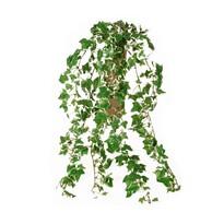 Umělý Mini břečťan, 70 cm