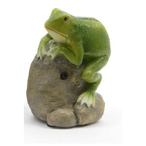 Kvákající žába na kameni