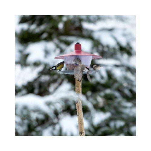 Kŕmidlo pre vtáčiky Finch, červená