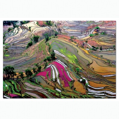 Puzzle Rýžová pole
