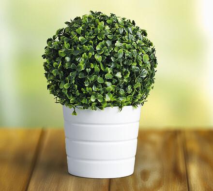Buxusová koule tmavě zelená