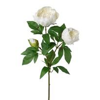 Mű bazsarózsa, fehér, 70 cm
