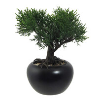 Mű bonsai Cédrus virágcserépben, zöld, 19 cm
