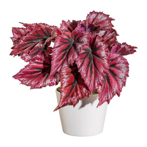 Mű Begónia virágcserépben piros, 25 cm