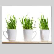 Jednodílný obraz Hrnky s trávou