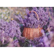 Orléans Lavender vászonkép, 78 x 58,5 cm