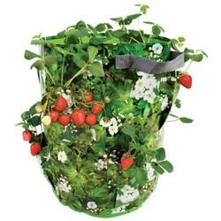 Vrece na pestovanie jahôd a byliniek