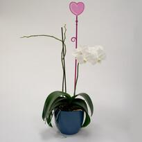 Plastia Tyčka k orchideji Srdce fialová, 60 cm