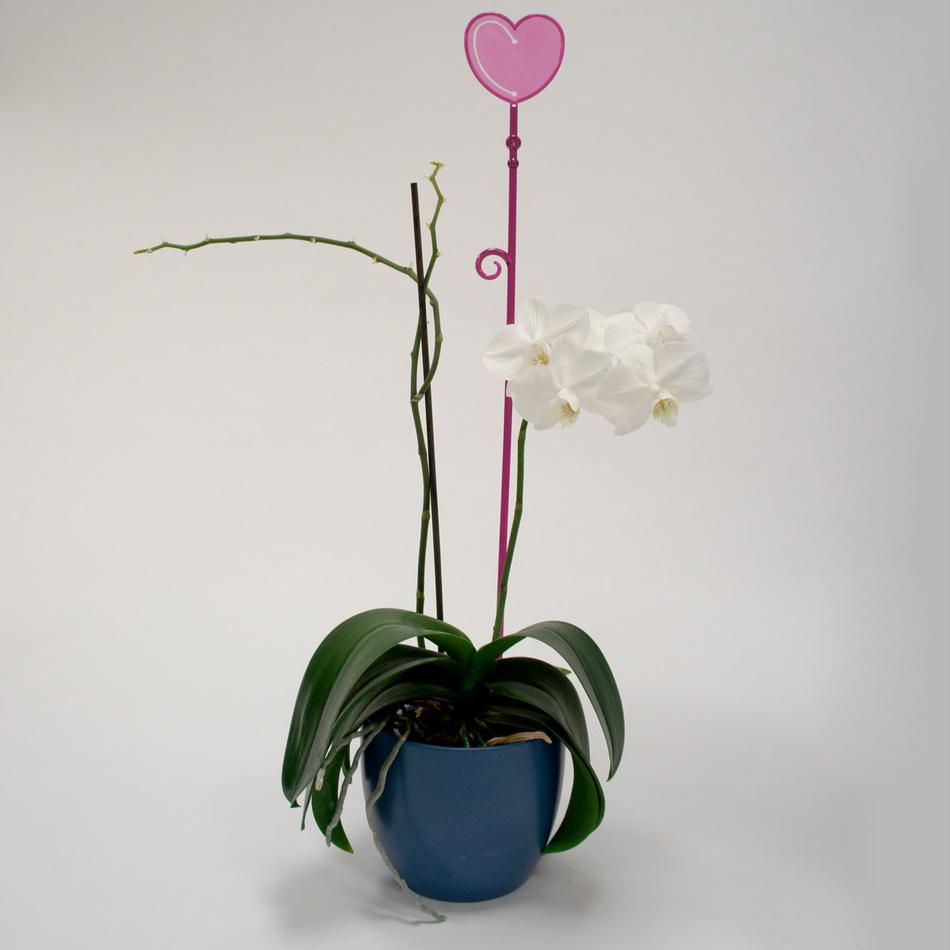 Tyčka k orchideji srdce, průsvitná fialová, 2 ks, Plastia