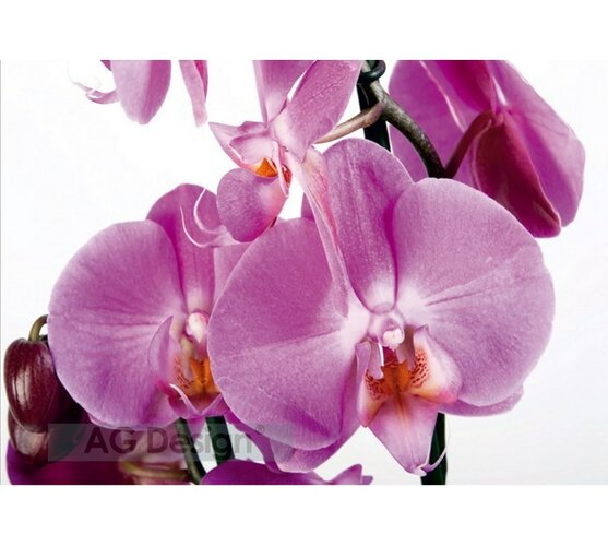 Fototapeta Orchidej 254 x 360 cm, Hornschuch