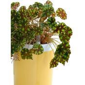 Samozavlažovací květináč Calimera B1, bílá a žlutá