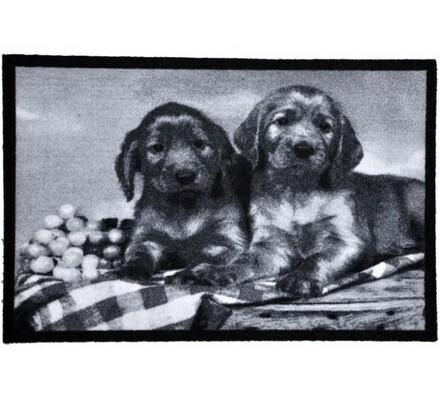 Vnútorná rohožka Šteňatá, 40 x 60 cm, biela + čierna, 40 x 60 cm