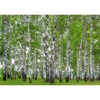 Fototapeta XXL Brezový háj 360 x 270 cm, 4 diely