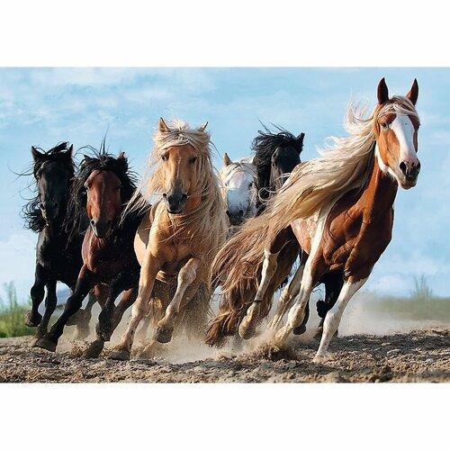 Trefl Puzzle Cválající koně, 1000 dílků