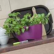 Květináč na bylinky Limes Dublo 2,3 l, fialová