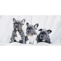 Jerry Fabrics French Bulldogs törölköző, 70 x 140 cm