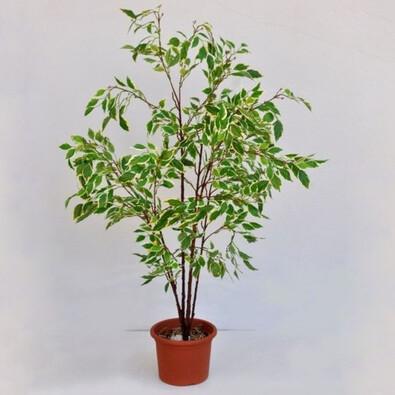 Umělý strom ficus drobnolistý 120 cm
