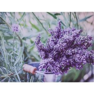 Obraz na plátně Amiens Lavender