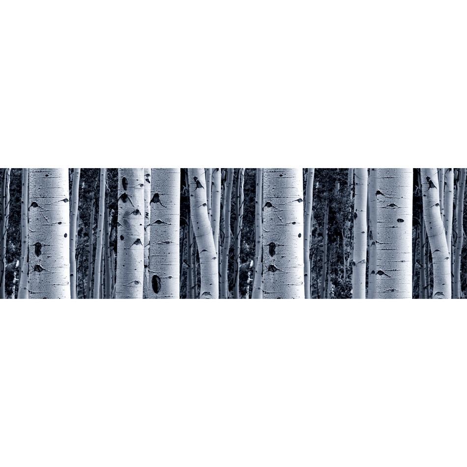 AG Art Samolepicí bordura Bříza, 500 x 14 cm