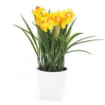Umelá kvetina Narcis, tmavo žltá