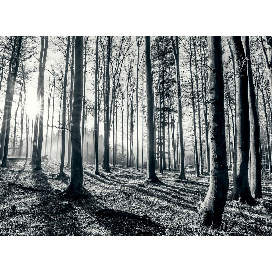 Up and Down Fototapeta Black Forest, 232 x 315 cm