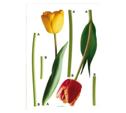 Samolepící dekorace Tulipány