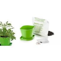 Tescoma Súprava pre pestovanie byliniek SENSE, rukola
