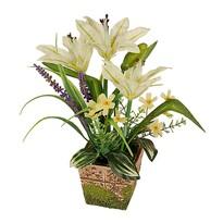 Aranžmán Ľalia v kvetináči v. 28 cm, biela