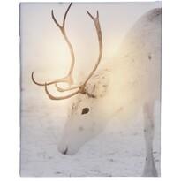 Obraz na płótnie LED Animal and snow White Rein deer, 20 x 25 cm