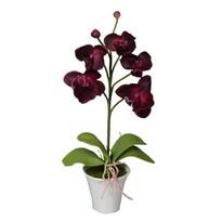 Umělá Orchidej v květináči tmavě červená, 35 cm