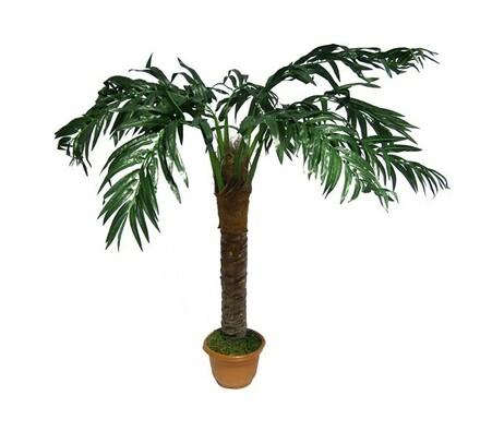 Strom palma, 130 cm