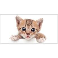 White Kitten törölköző, 70 x 140 cm