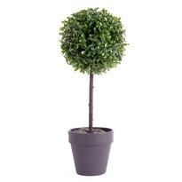 Buxusový stromček v kvetináči, čierna