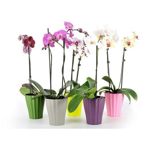 Plastia Orchidea kaspó Ola fehér, 2 db